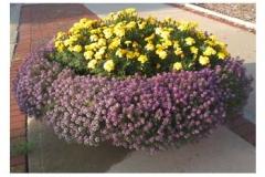 purple-yellow-planter
