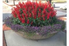 red-purple-planter