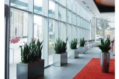 commercial-indoor-plants