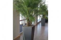 indoor-plant-container