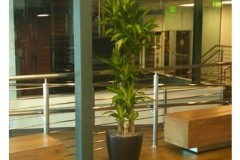 indoor-plant-containers-college