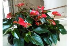 indoor-planter