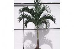 interior-plant-10