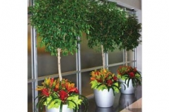 interior-plant-containers