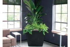 office-planters