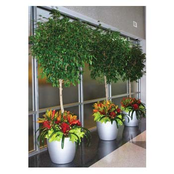 Interior Plant Containers
