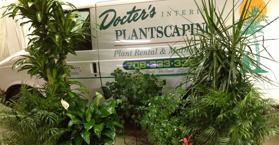 Docteru0027s Interior Plantscaping U2013 Plant Service And Maintenance